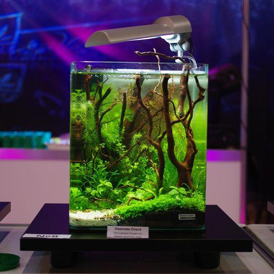 decorazioni-creative-piccolo-acquario-10