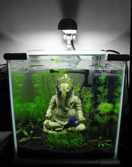decorazioni-creative-piccolo-acquario-12