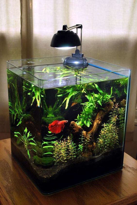 piccoli acquari allestiti a meraviglia ecco 20 idee per