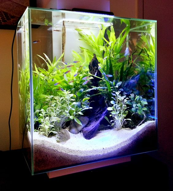 aquarium einrichten ideen affordable mein kleines becken with aquarium einrichten ideen. Black Bedroom Furniture Sets. Home Design Ideas