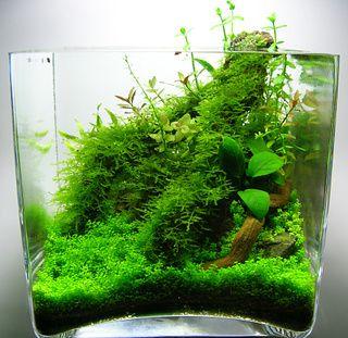 decorazioni-creative-piccolo-acquario-5