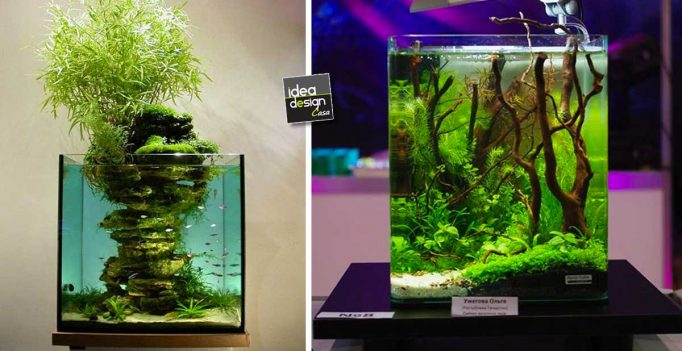 Idee per un un pacchetto regalo originale per natale with for Regalo acquario