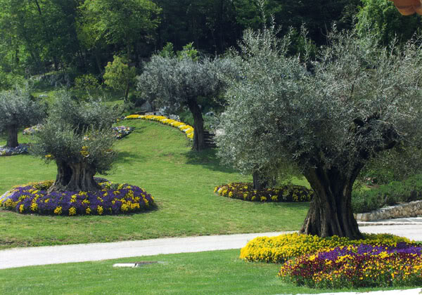 Creare una bella aiuola sotto l 39 albero 20 esempi for Aiuola con ulivo