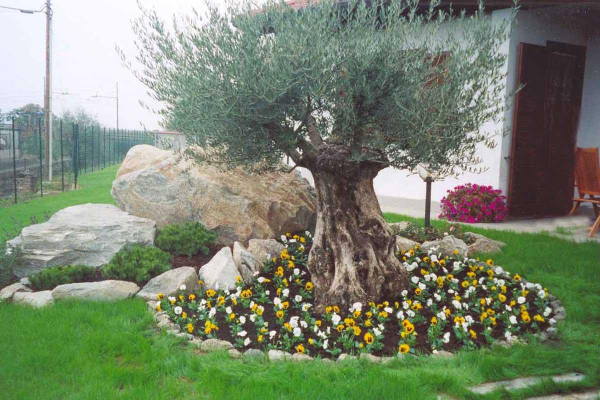 Abbellire un albero di ulivo ecco 16 splendidi esempi per for Idee per abbellire il giardino