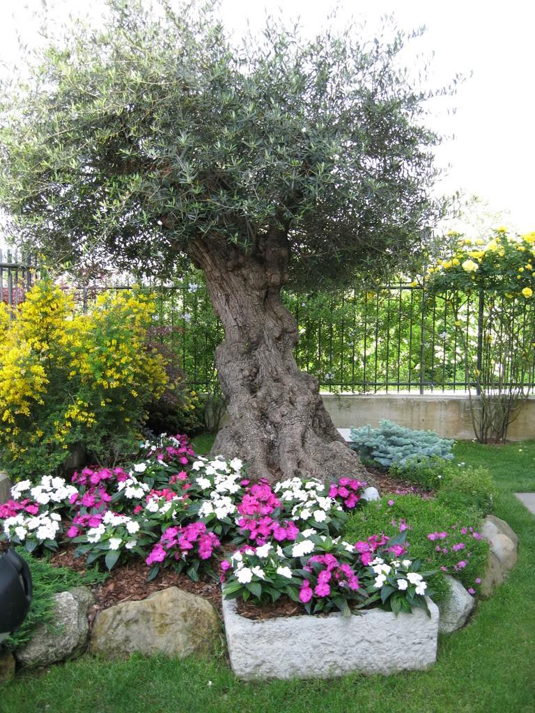 Abbellire un albero di ulivo! Ecco 16 splendidi esempi per ispirarvi...
