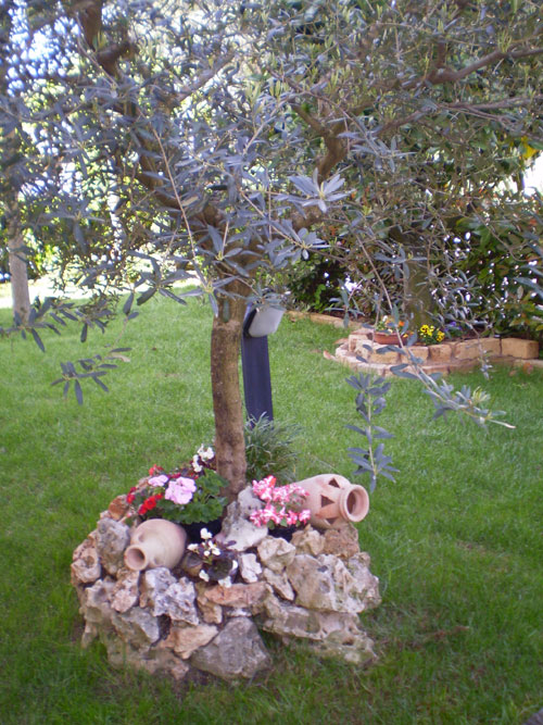Come far risaltare un albero di ulivo \u2013 Idea n° 7