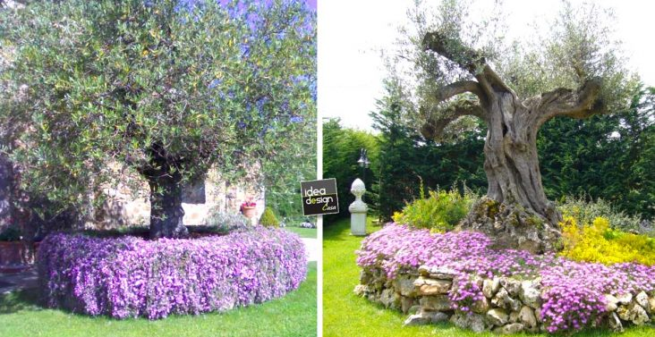 Abbellire un albero di ulivo! Ecco 16 splendidi esempi per ispirarvi ...