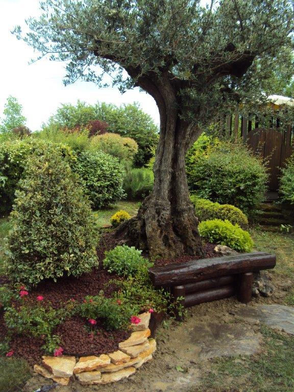 Abbellire un albero di ulivo ecco 16 splendidi esempi per for Aiuola con olivo