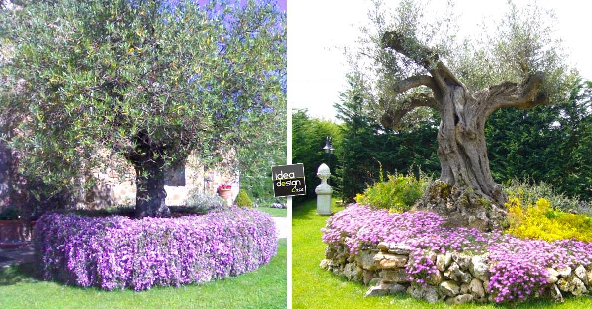 Abbellire un albero di ulivo ecco 16 splendidi esempi per - Come abbellire un bagno vecchio ...