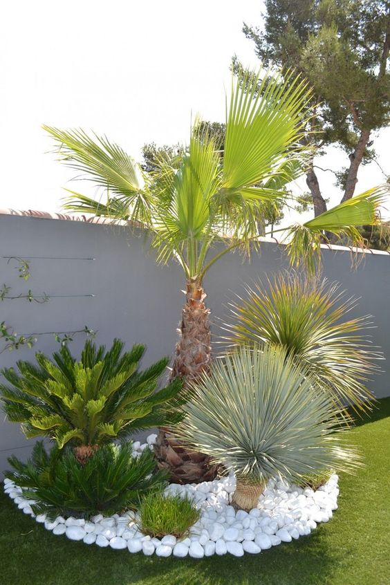 giardino con le palme