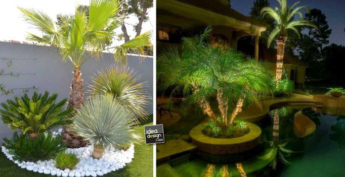 Giardino con le palme 20 idee per dare un tocco tropicale for Ver jardines