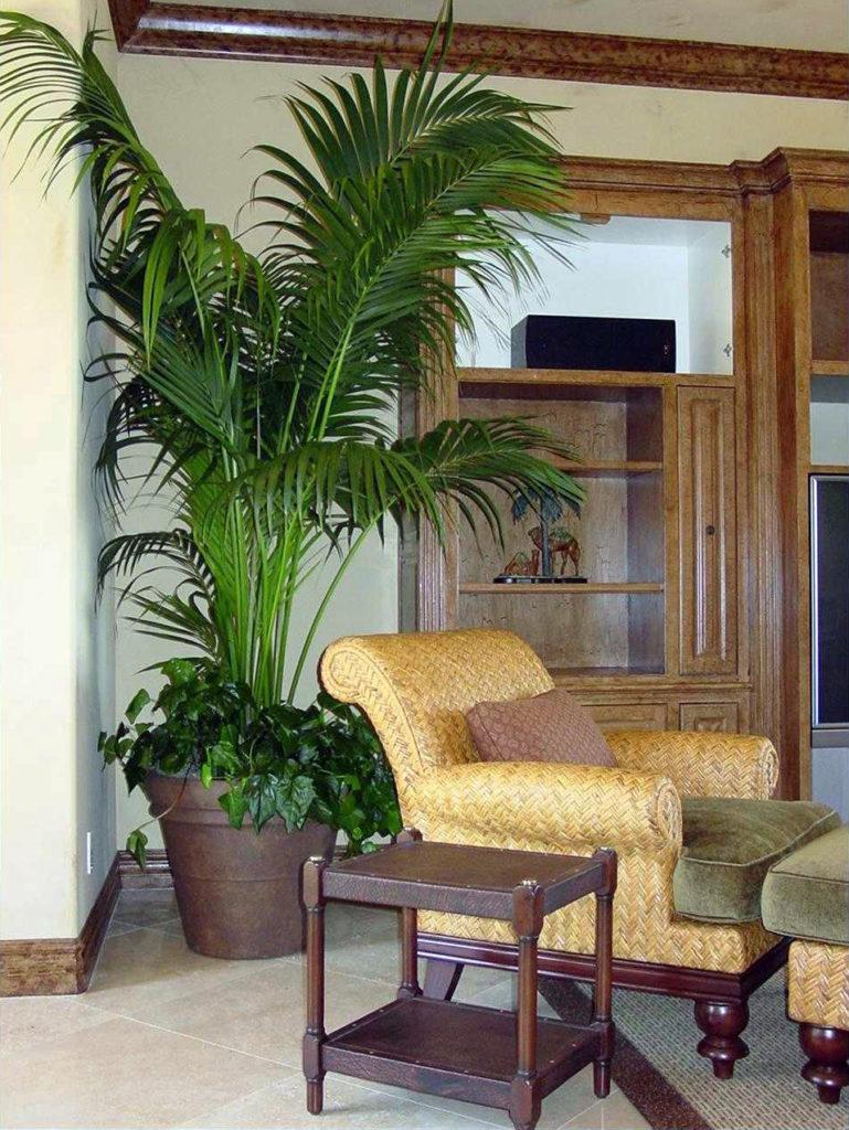 Dieci piante da appartamento indistruttibili