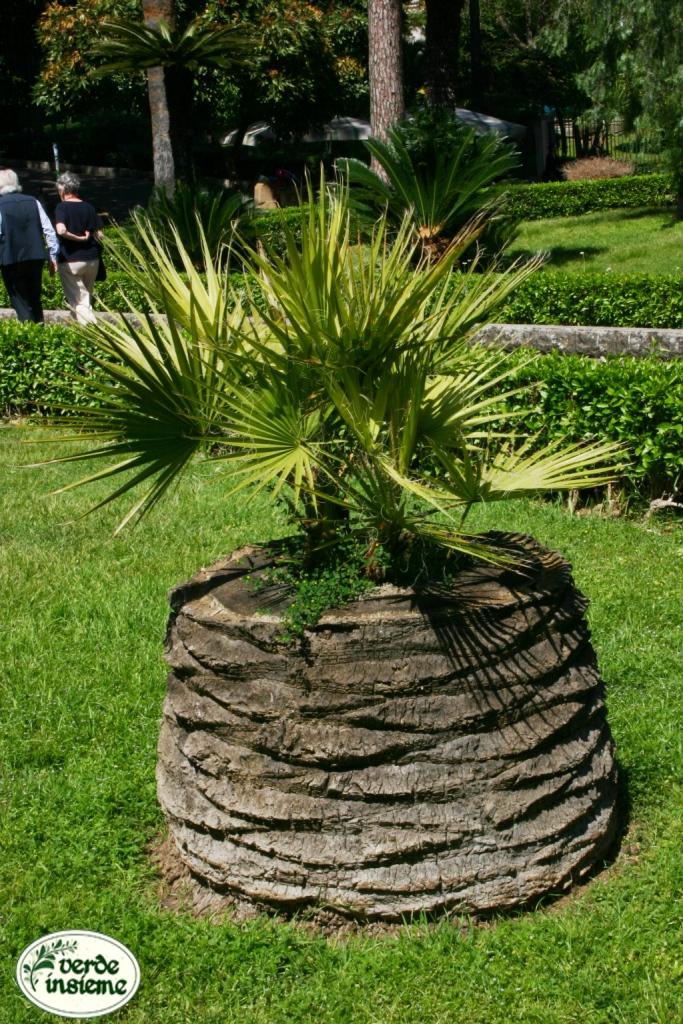 Creare una fioriera da un tronco d 39 albero abbattuto 20 - Idee per creare un giardino ...