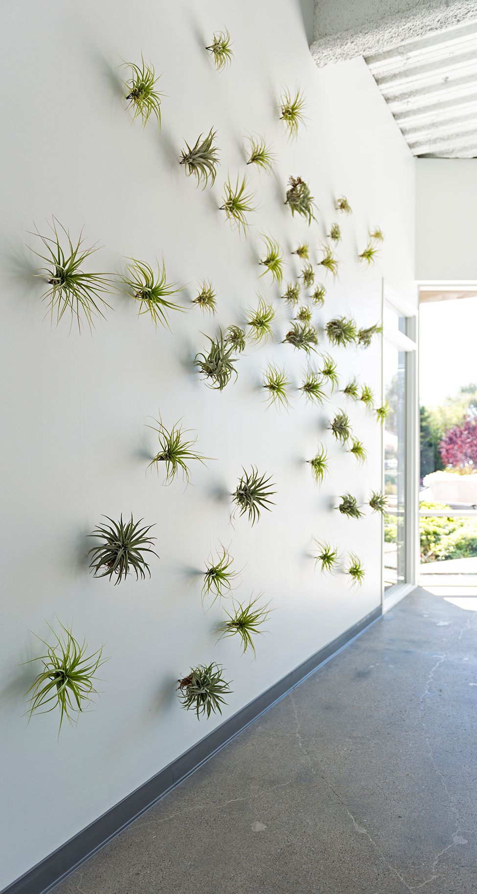 Decorare una parete con delle piantine 20 idee per - Decorare una parete ...