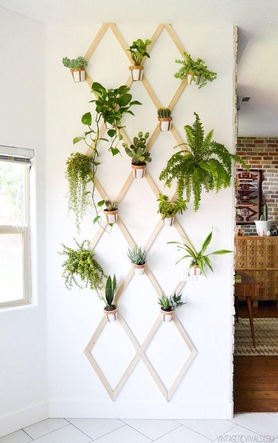 decorare una parete con delle piantine