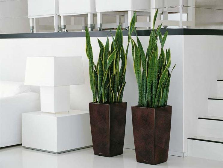 Piante da appartamento indistruttibili a prova di for Vasi per piante da interno moderni
