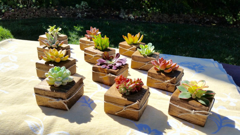 Vasetti creativi con le piante grasse! 20 idee originali per ispirarvi ...