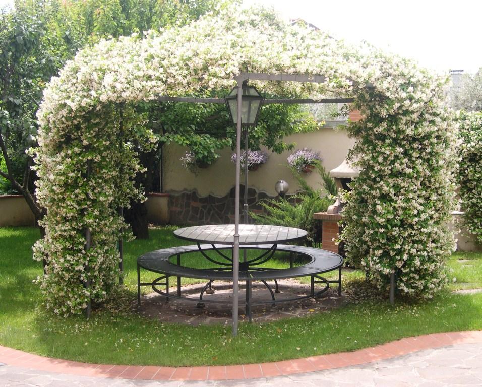 Piante Di Casa Rampicanti ~ Ispirazione Interior Design & Idee Mobili