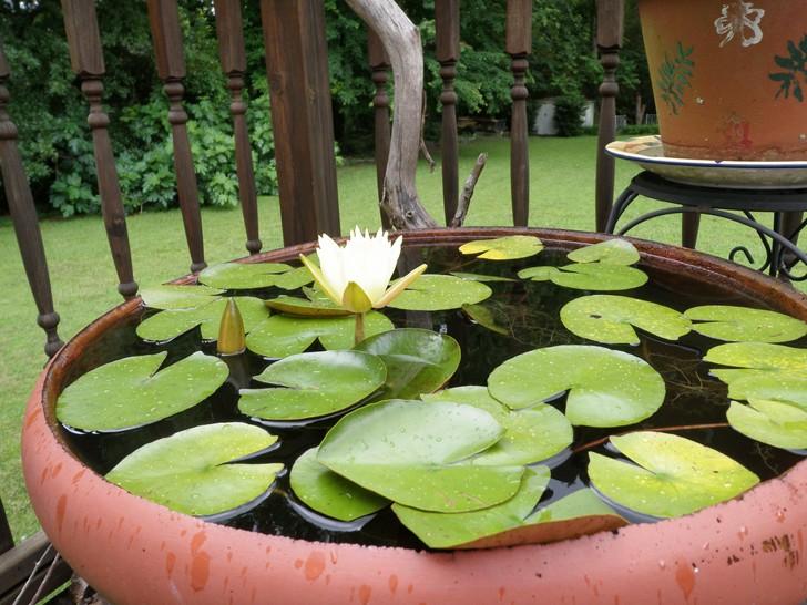 Piccolo laghetto in un vaso