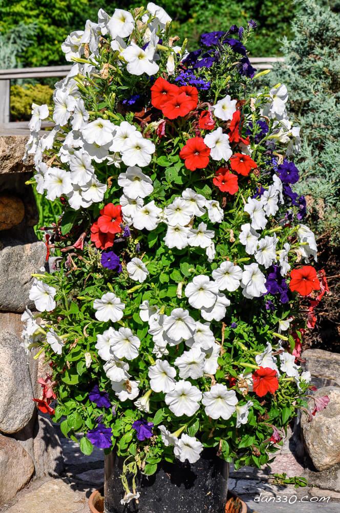 Una torre di fiori in giardino 20 idee creative a cui ispirarsi video - Fiori di giardino foto ...