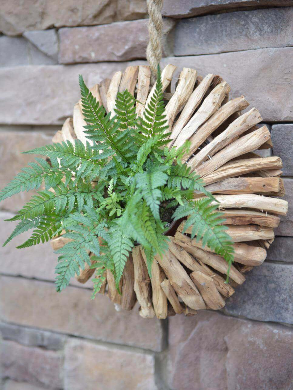 plantas colgantes para decorar el jardn