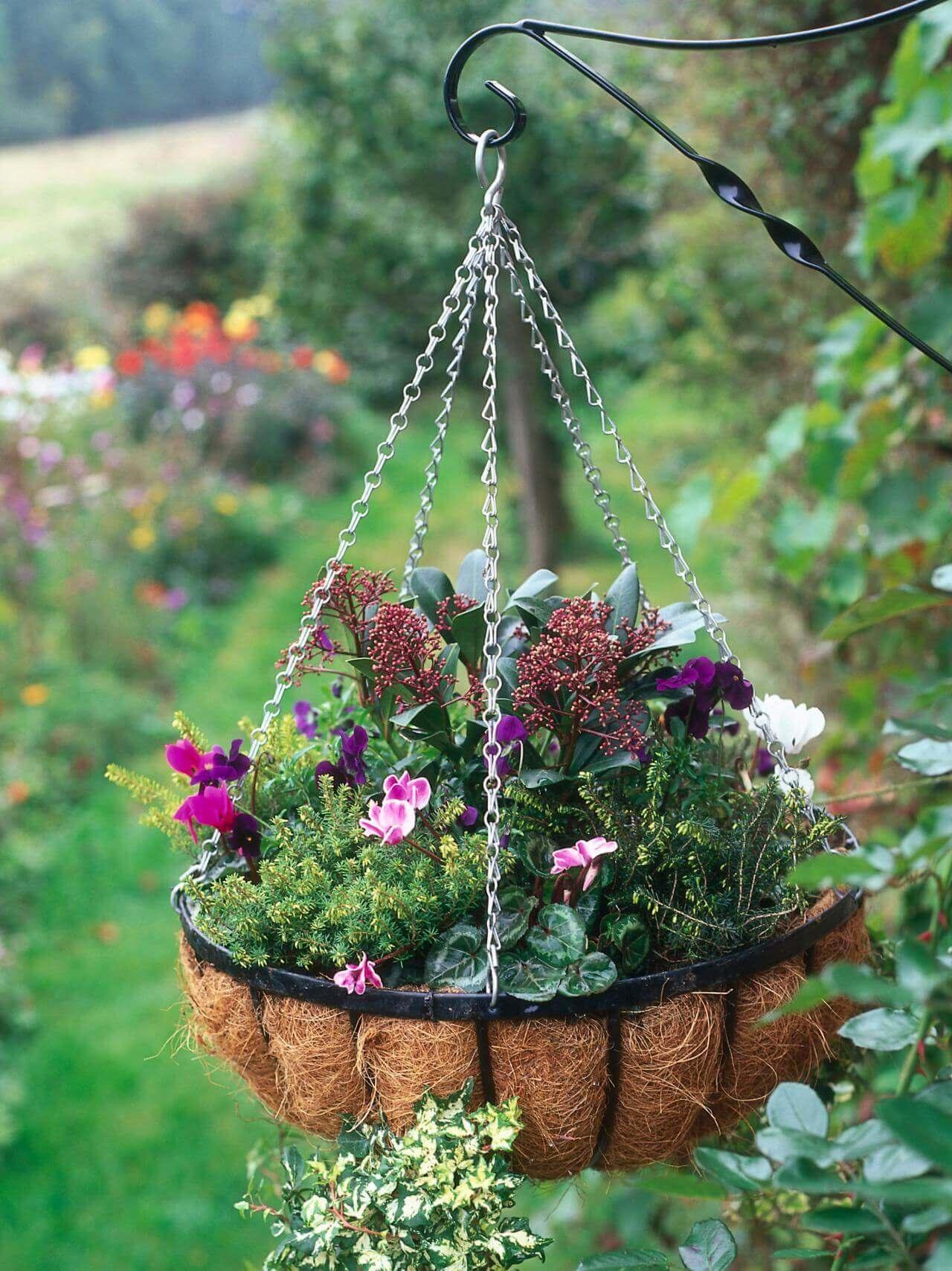 Piante sospese per decorare il giardino ecco 20 esempi a - Piante per giardino ...