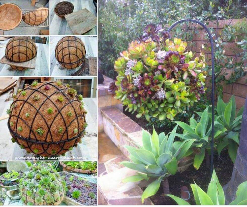 plantas colgantes para decorar el jardn con