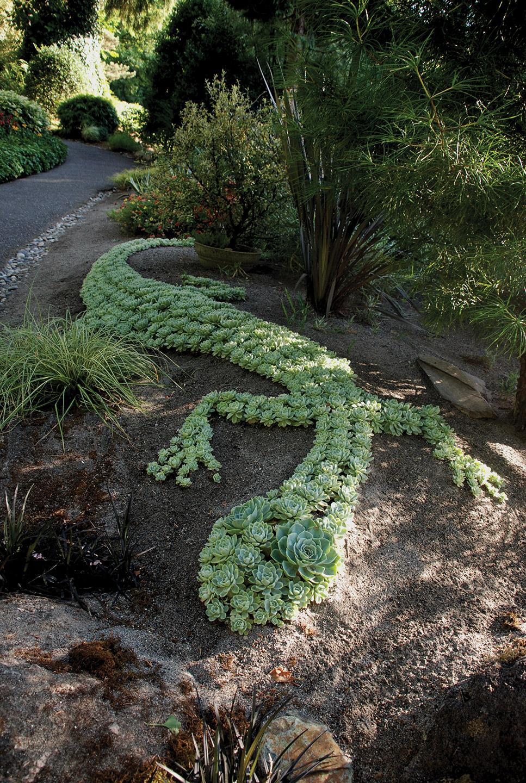 Idee giardino con piante grasse for Idee di giardino