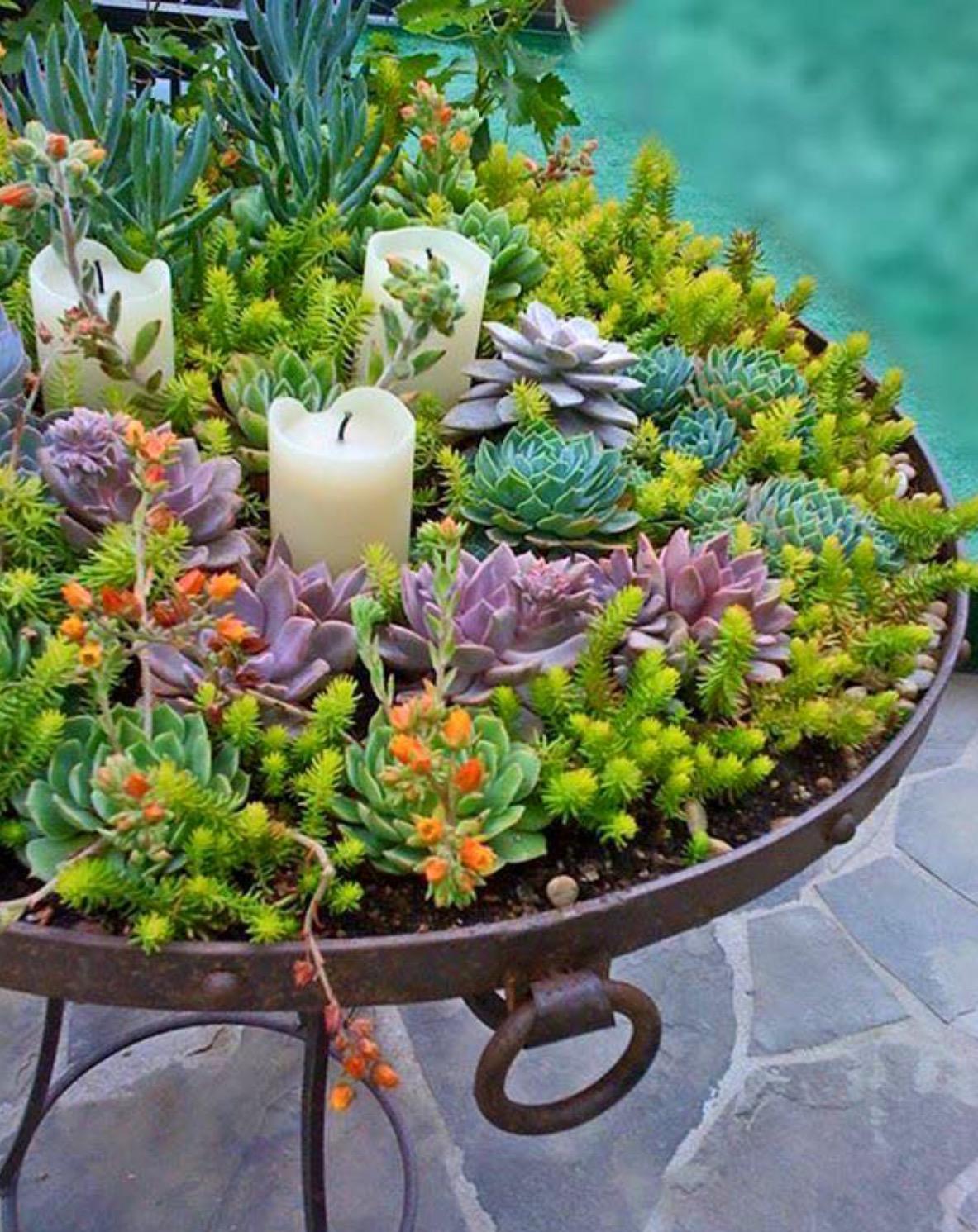 Piante Grasse Da Giardino un giardino di piante grasse! 20 esempi stupendi da cui