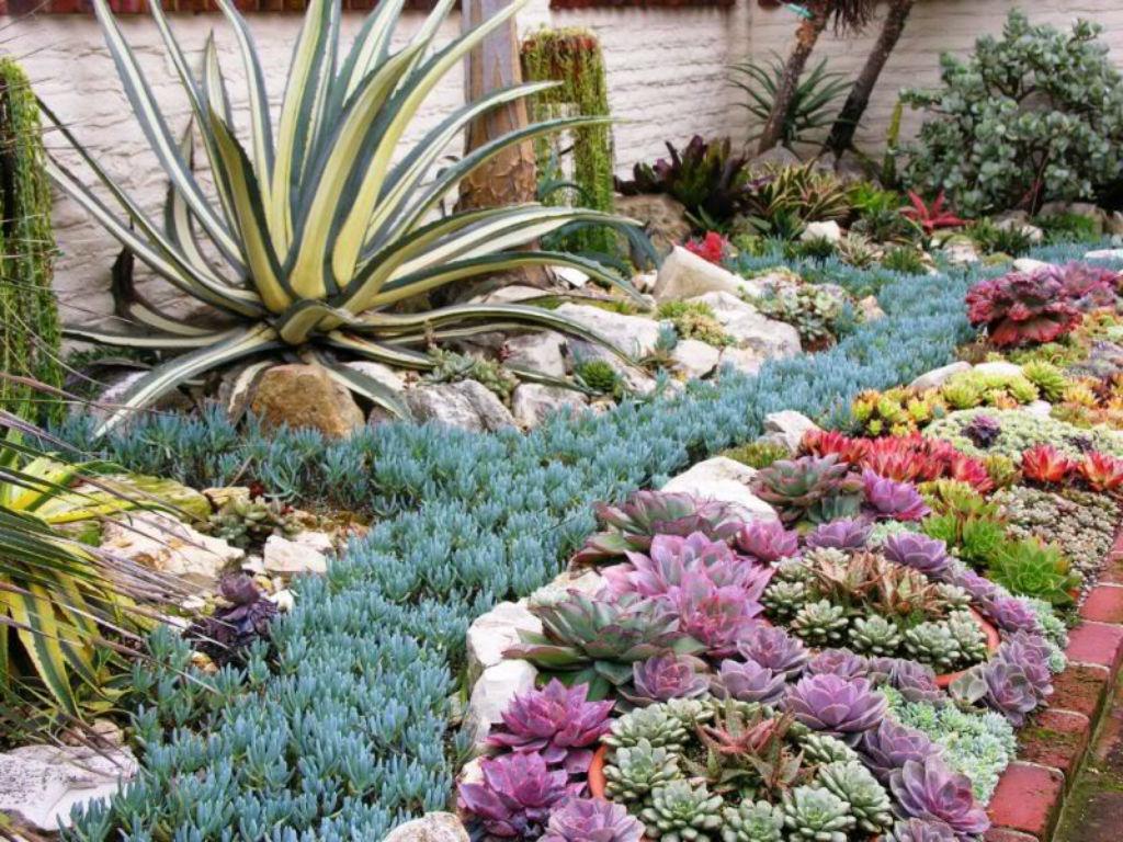 Un giardino di piante grasse esempi stupendi da cui trarre