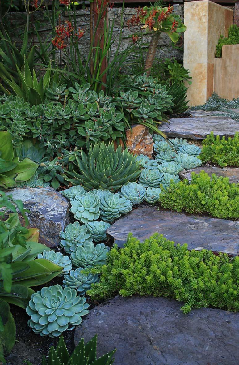 Preferenza Un giardino di piante grasse! 20 esempi stupendi da cui trarre  EN65