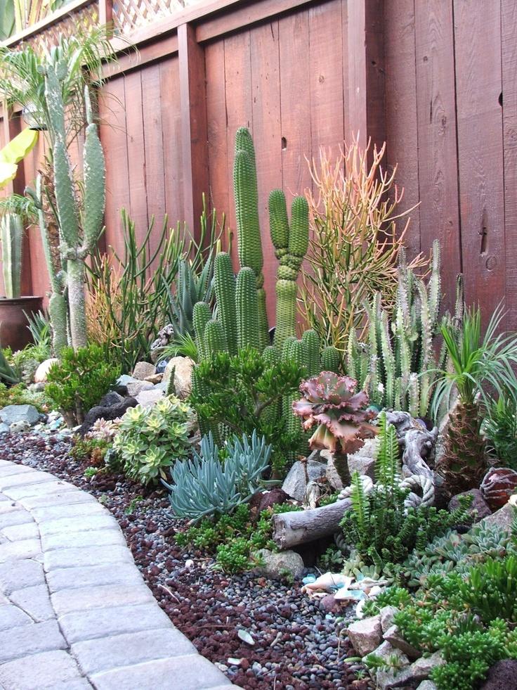 Un giardino di piante grasse 20 esempi stupendi da cui - Piante x giardino ...