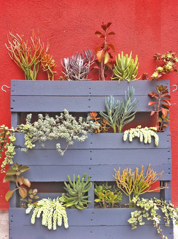 Un giardino di piante grasse