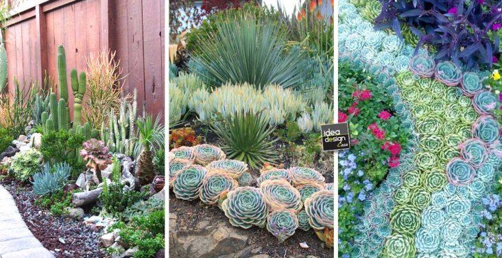 Un giardino di piante grasse 20 esempi stupendi da cui for Piante grasse in giardino