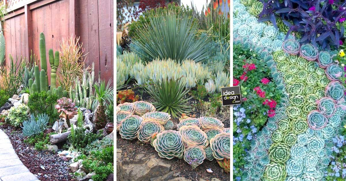 Un Giardino Di Piante Grasse 20 Esempi Stupendi Da Cui Trarre