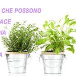 Creare energia positiva con le piante nella tua casa - Piante da tenere in camera da letto ...