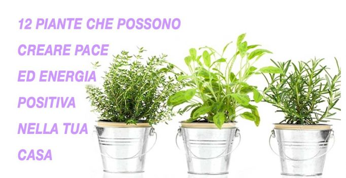 Creare energia positiva con le piante