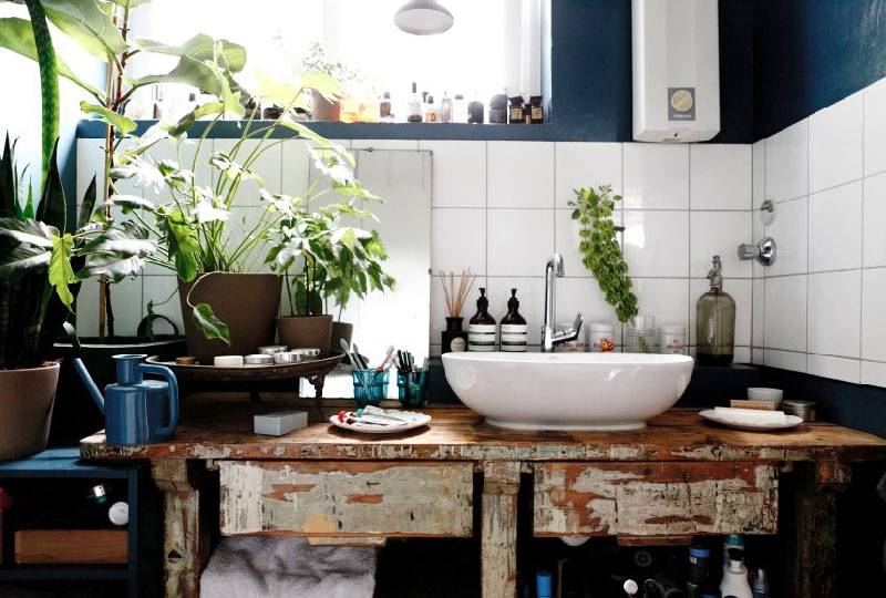 Piante In Casa Idee : Decorare casa con le piante idee per una molto