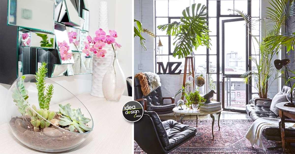 Abbellire casa con le piante