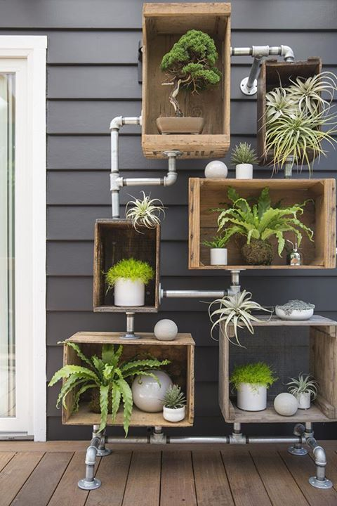 Piante e fiori per decorare casa ecco 15 idee green che for Decorare casa