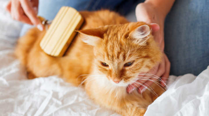 Come rimuovere i peli degli animali domestici