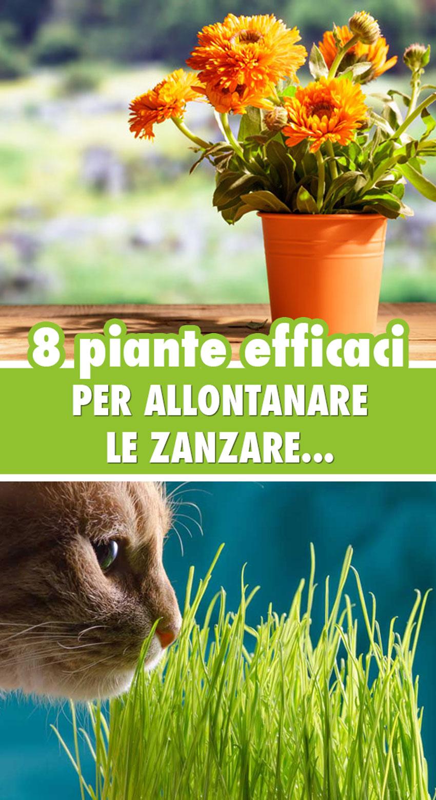 lista delle piante antizanzare le piu efficaci