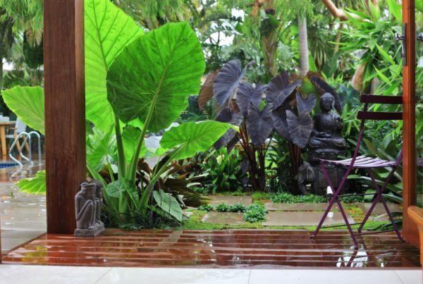 arredare il giardino con piante esotiche