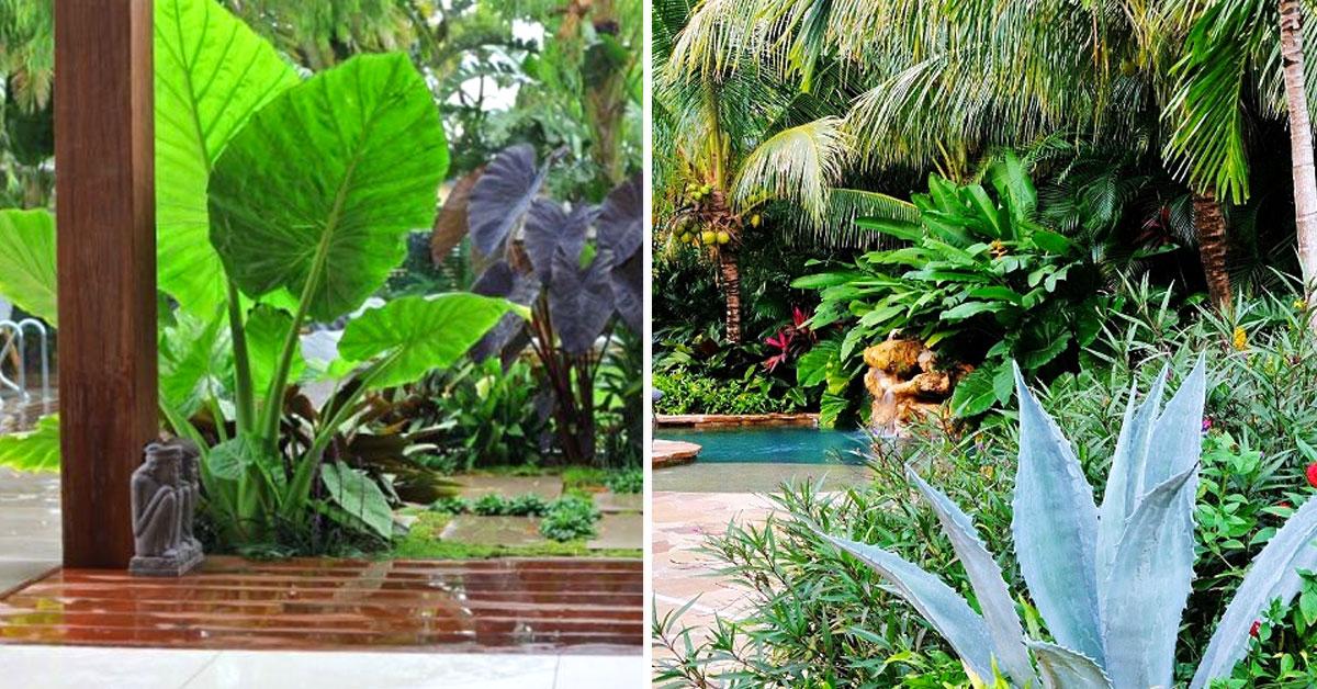Arredare il giardino con piante esotiche 15 accattivanti for Arredare il giardino