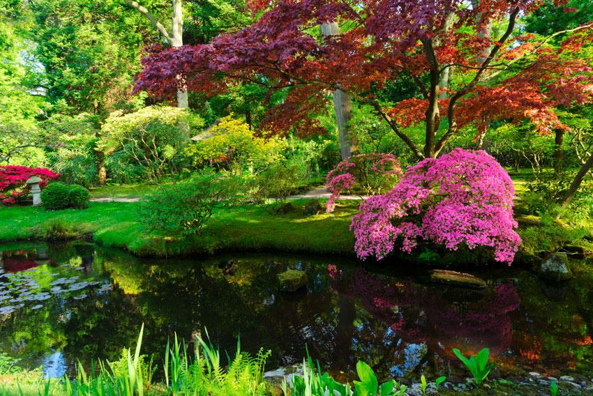 alberi fucsia in questo giardino giapponese.