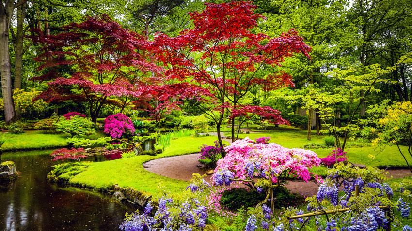 giardino rilassante con fiori colorate.