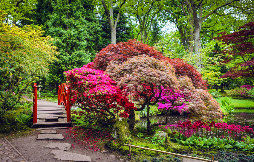 giardino giapponese con albero colorato.