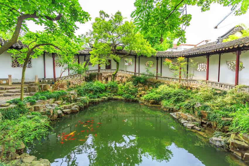 laghetto con pesci, giardino cinese.