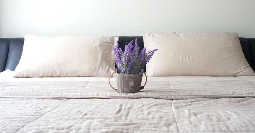 Dormire meglio con le piante eccole 5 piante da tenere in - Piante da tenere in camera da letto ...