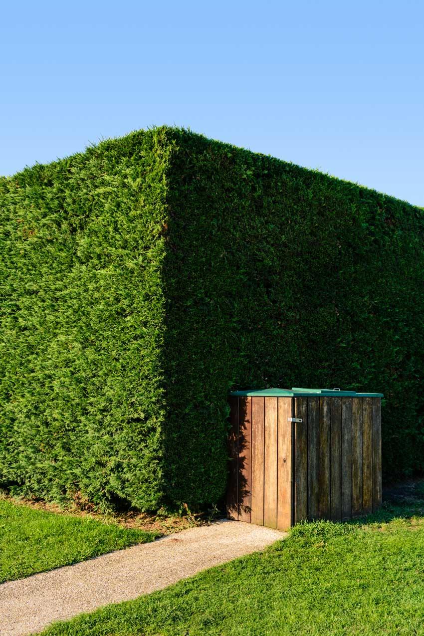 Piante Da Siepi Immagini 10 piante da siepe sempreverdi per una copertura tutto l'anno